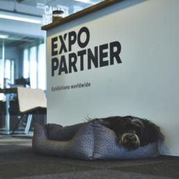 Expo Partner